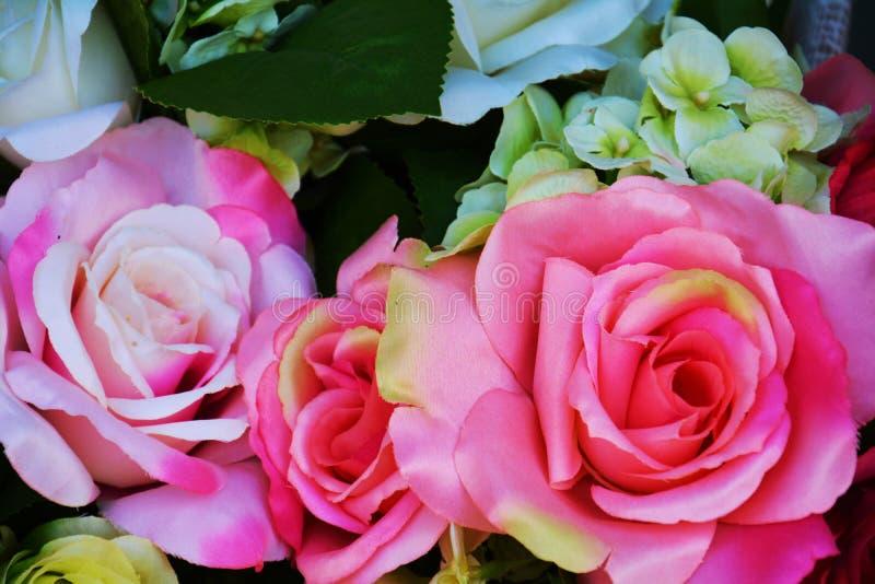 Różowe róże i zieleń opuszczają kwiaty, zakończenie up zdjęcie royalty free