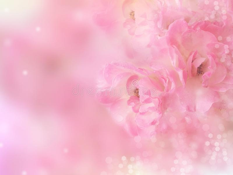 różowe róże kwitną granicę z bokeh plamy tłem fotografia stock