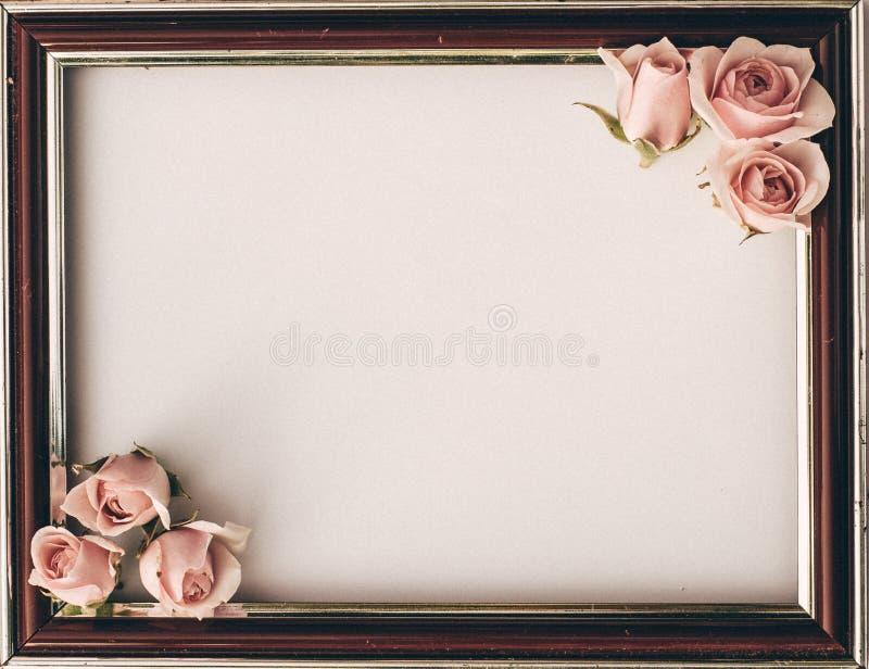 Różowe róże kwitną pustej biel granicy miękkiego tło dla valentine fotografia royalty free