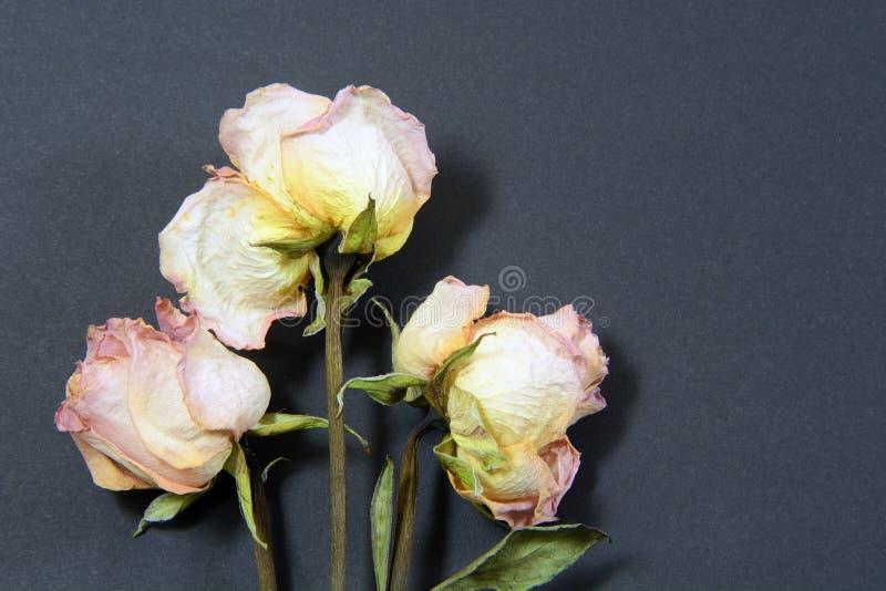 Różowe róże na czerni fotografia stock