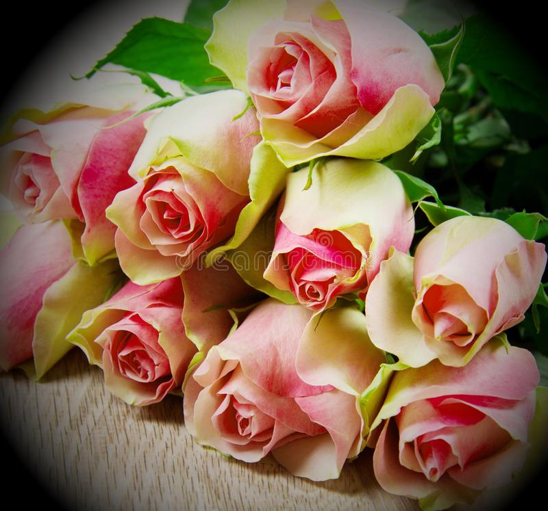 Różowe róże na drewnianym tle fotografia stock