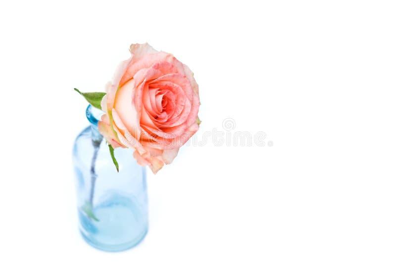 różowe róże niebieski wazę zdjęcia royalty free
