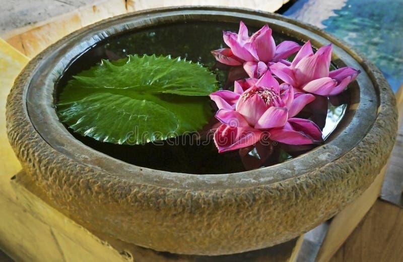 Różowe wodne leluje w kamiennym pucharze z wodą i liściem obraz royalty free