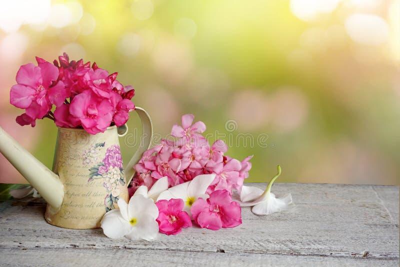 Różowego i białego kwiatu natury wiosna i lata tło obrazy royalty free