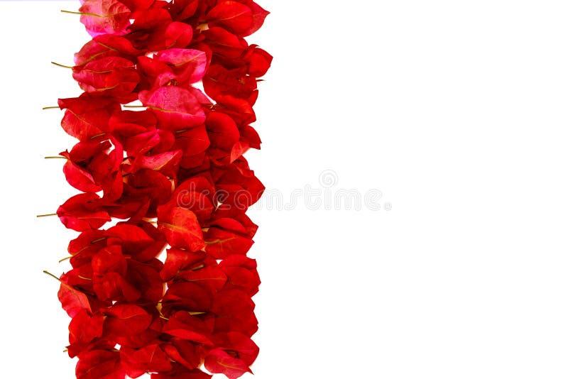 Różowi bougainvillea płatki  zdjęcia royalty free