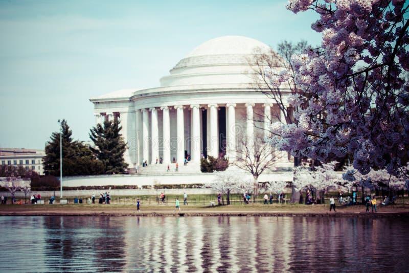 Różowi czereśniowi okwitnięcia w wiośnie obramia Jefferson pomnika w washington dc zdjęcia stock