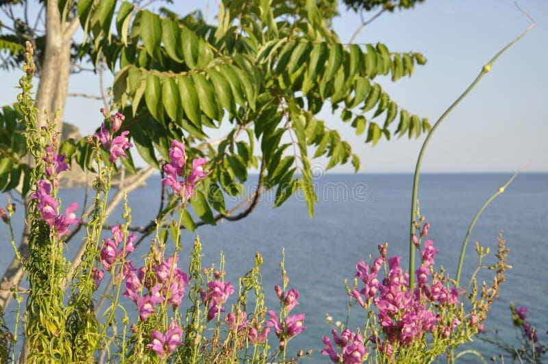 Różowi dzicy kwiaty i morze obrazy stock