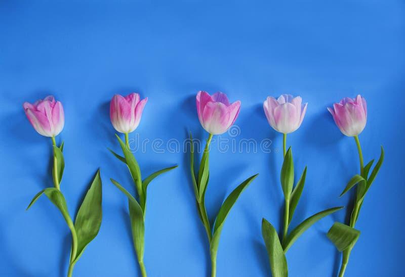 różowi Easter tulipany zdjęcie stock