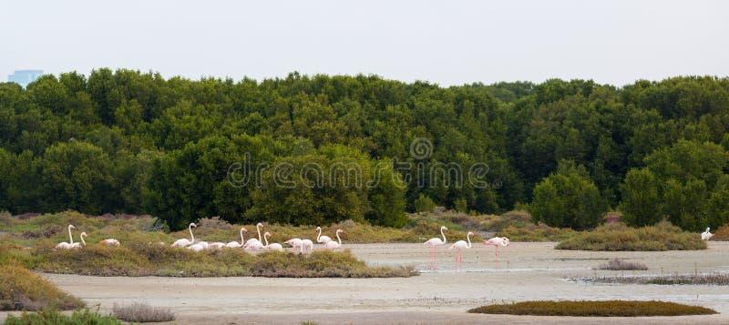 Różowi flamingi obraz stock
