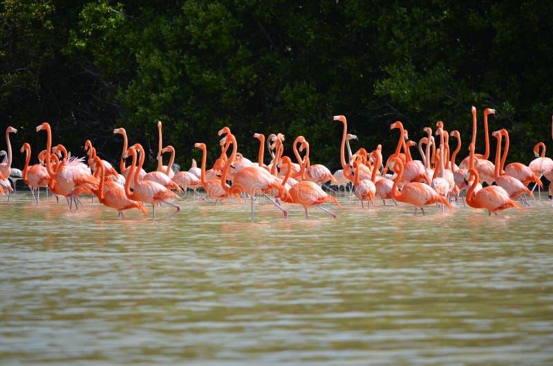 Różowi flamingi fotografia stock