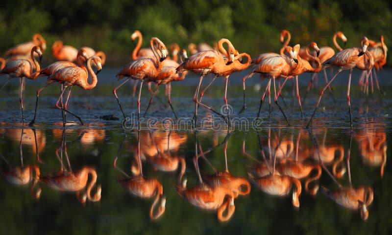 Różowi flamingi obraz royalty free