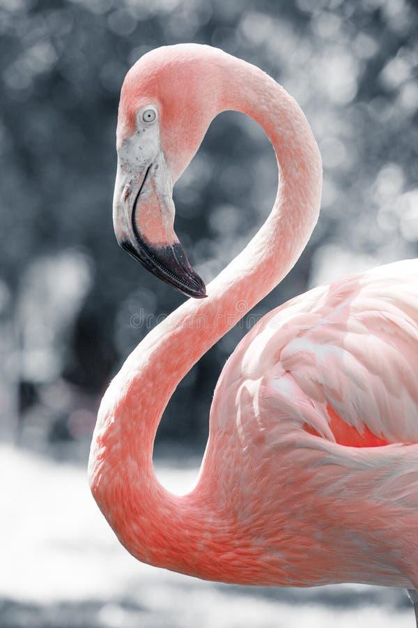Różowi flamingi przeciw zamazanemu tłu fotografia stock