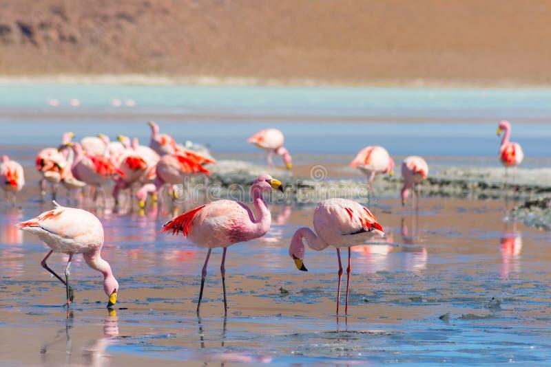 Różowi flamingi przy obraz stock