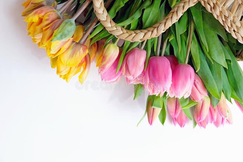 Różowi i żółci tulipany w słomianym backet na białym tle fotografia stock