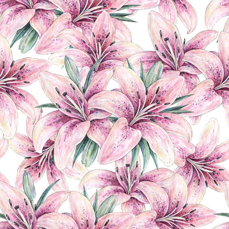 Różowi leluja kwiaty odizolowywający na białym tle Akwareli handwork ilustracja ilustracji
