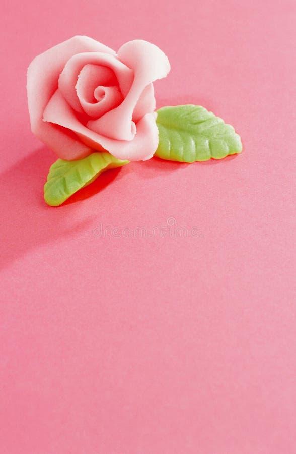 Różowi marcepany wzrastali obraz royalty free