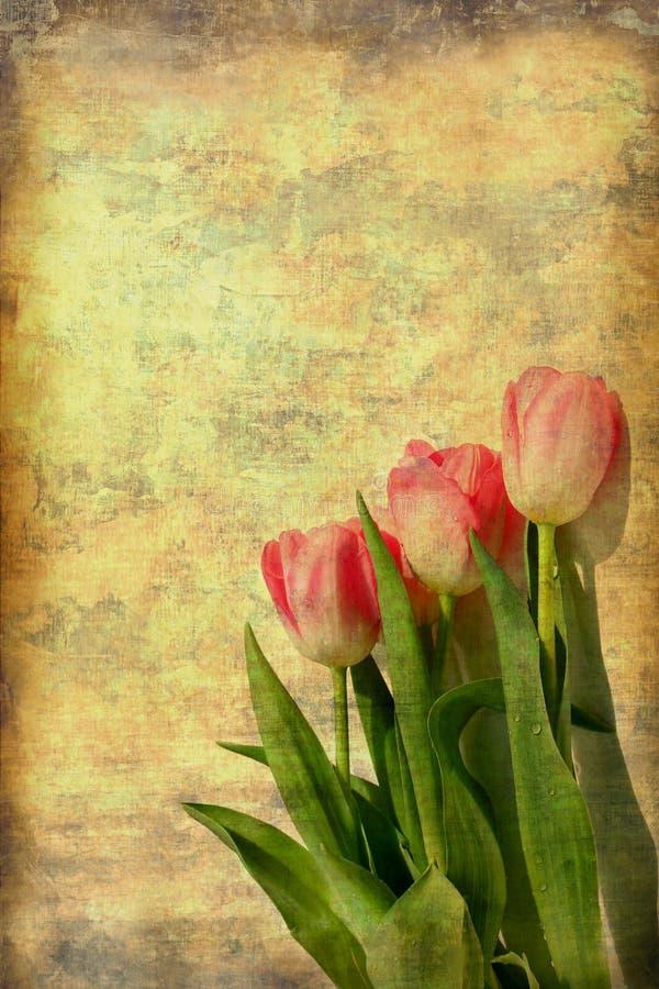 różowi sztuka tulipany fotografia royalty free