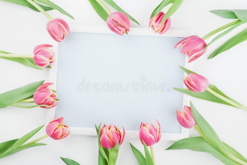 Różowi tulipanów kwiaty, rama dla wiosny mockup odgórnego widoku w mieszkanie nieatutowym stylu z pustą przestrzenią dla teksta i zdjęcie stock