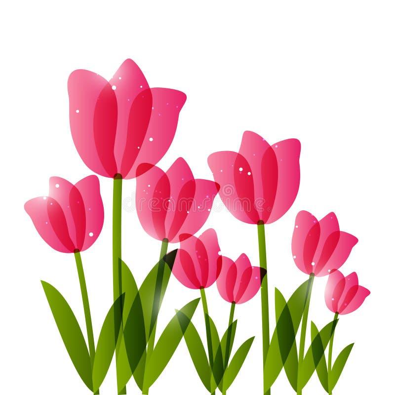 Różowi tulipany ilustracja wektor