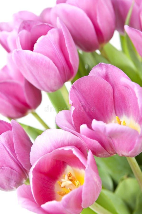 różowi tulipany obraz royalty free