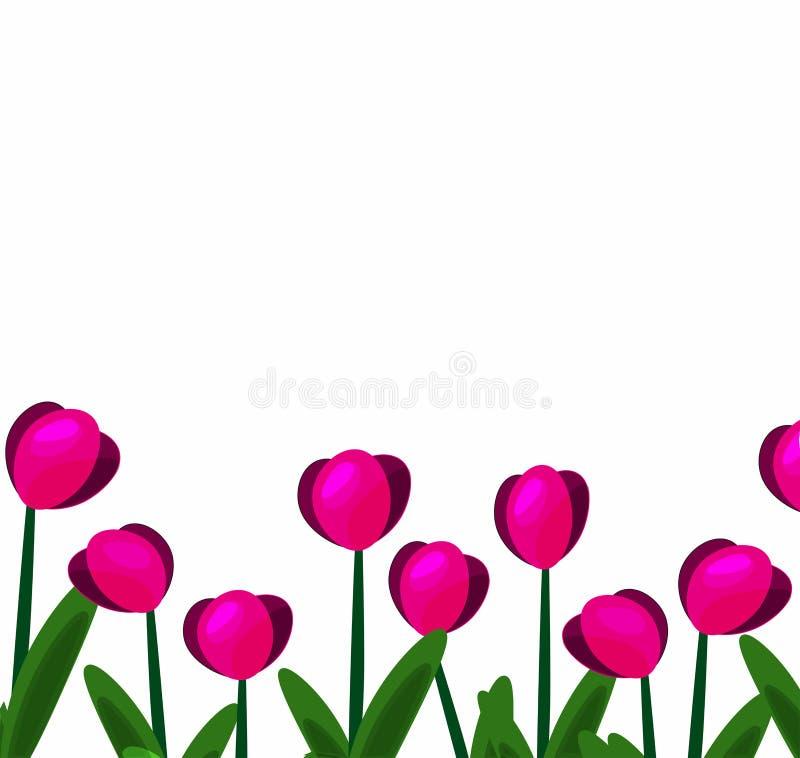 Różowi tulipany background-01 ilustracji