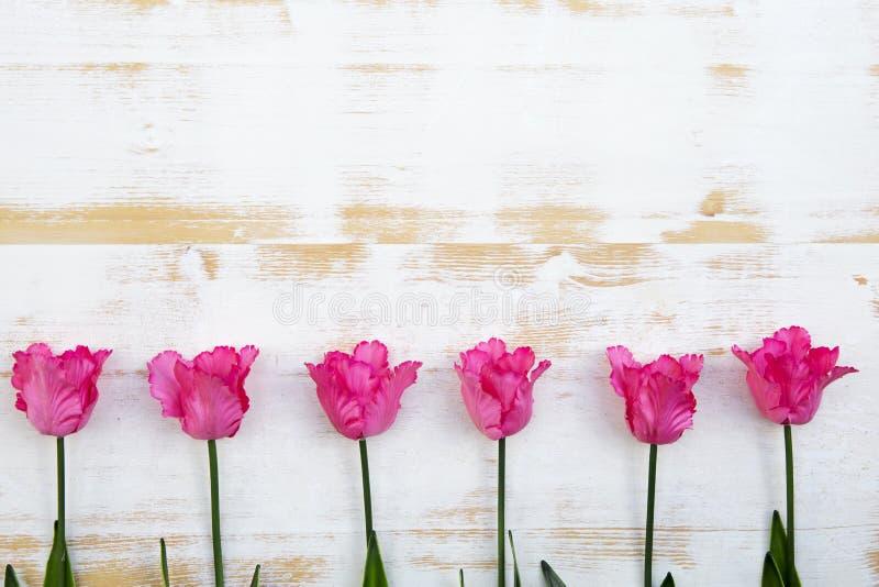Różowi tulipany na białym nieociosanym drewnianym tle zdjęcia stock
