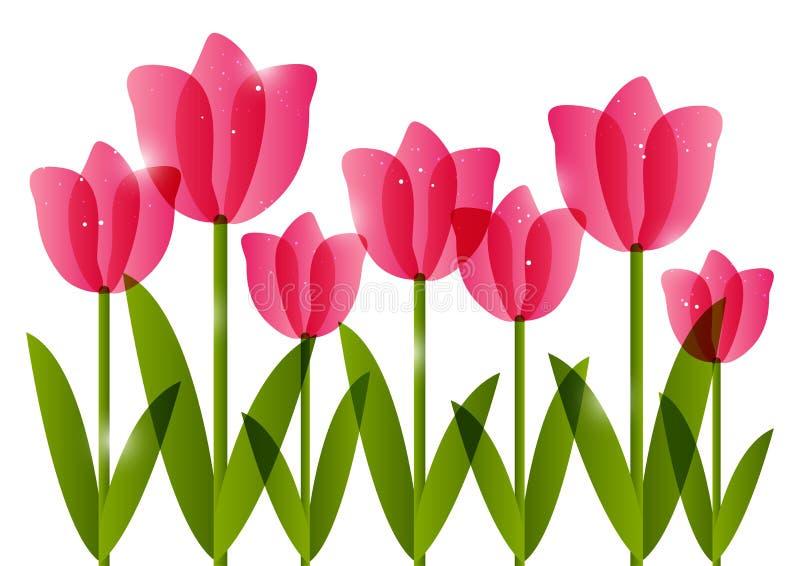 Różowi tulipany na białym tle royalty ilustracja