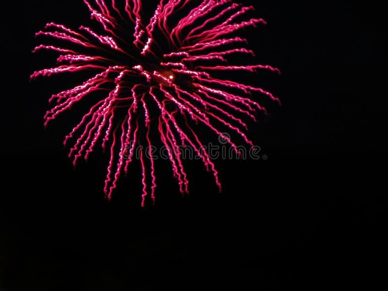 Różowi twirling strumienie fajerwerki zaświecają up czarnego niebo obraz stock