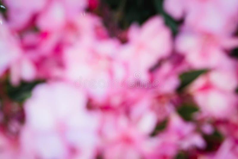 Różowi unfocused kwiaty zdjęcia royalty free