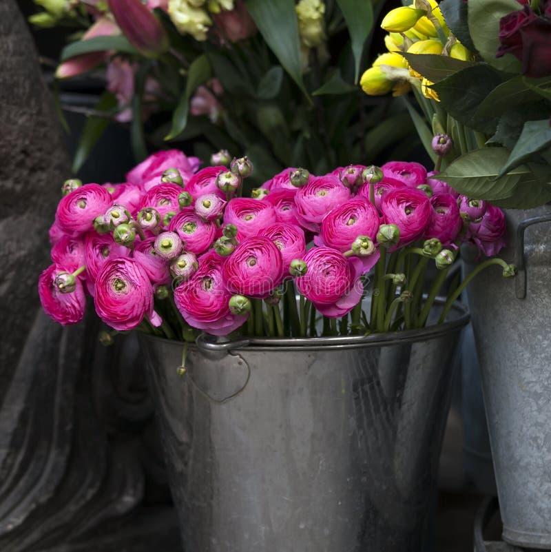Różowy łubin dla sprzedaży Perski jaskier kwitnie (ranunculus) obrazy royalty free