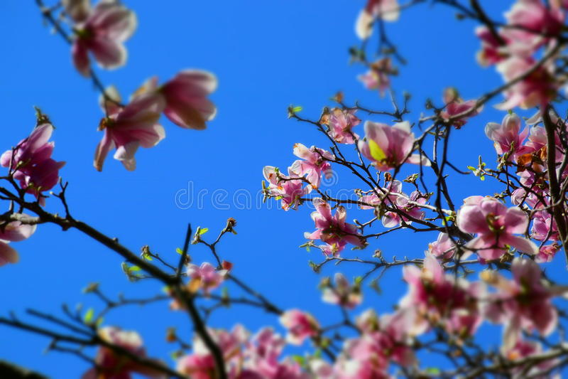 różowy błękit niebo obrazy royalty free
