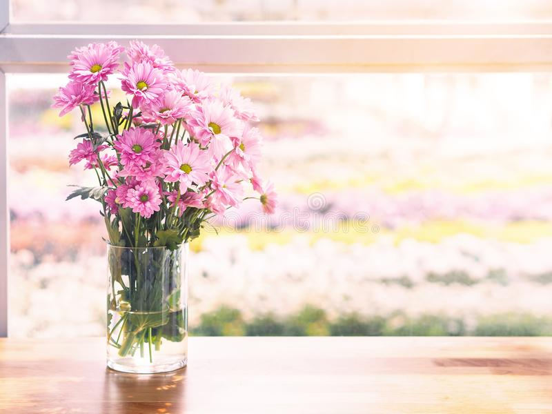 Różowy chryzantema kwiat w szklanym wazowym pobliskim okno zdjęcie royalty free