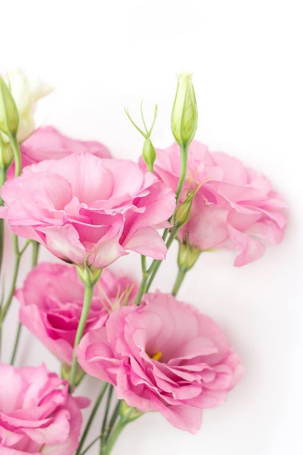 Różowy eustoma kwitnie na białym tle, pionowo skład zdjęcia stock