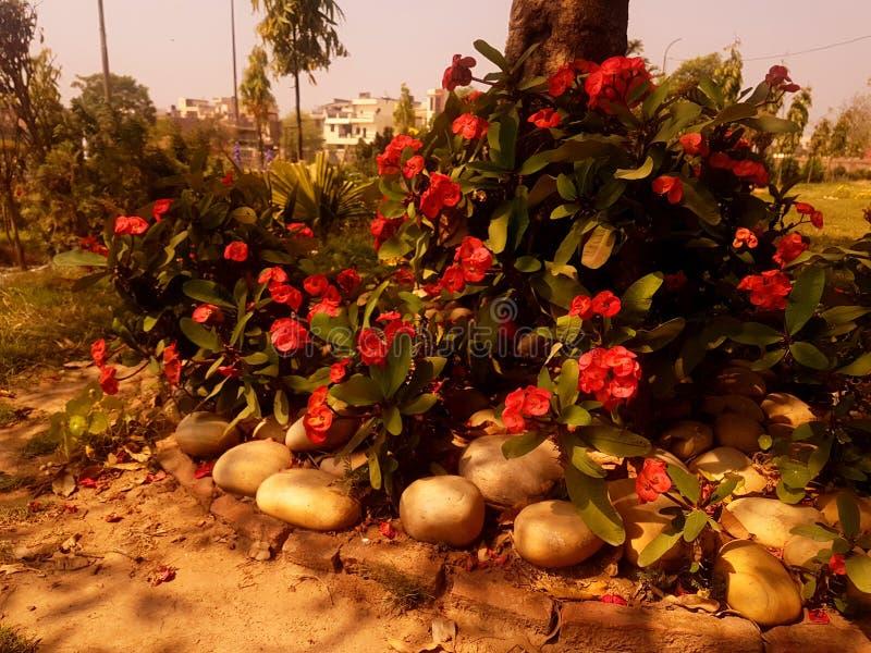 Różowy flowe obrazy royalty free