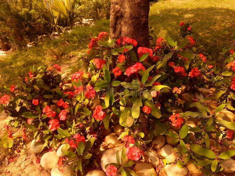 Różowy flowe obrazy stock