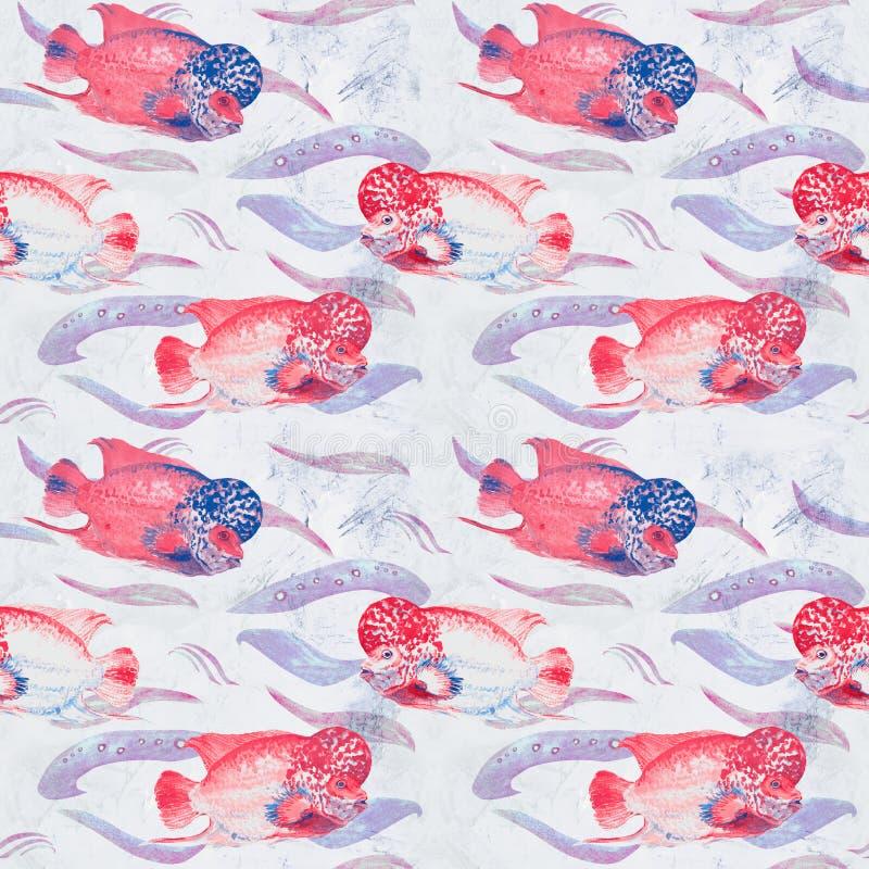 Różowy flowerhorn cichlid ryba Elvis napięcie, ręka malująca akwareli ilustracja, bezszwowy wzór na miękkiej błękitnej ocean powi ilustracja wektor