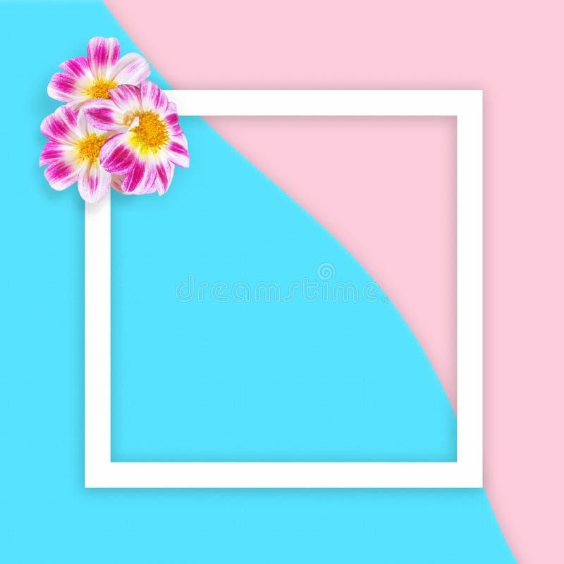 Różowy Georgina na abstrakcjonistycznym morza i menchii piaska tle z białą mieszkanie ramą obciosuje Mieszkanie nieatutowy nadcho zdjęcia stock