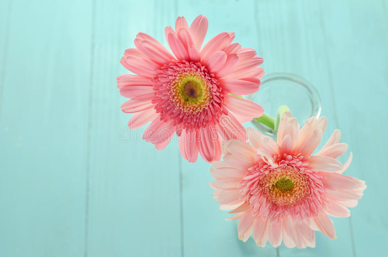 Różowy Gerbera kwitnie na błękitnym drewnianym tle zdjęcia stock