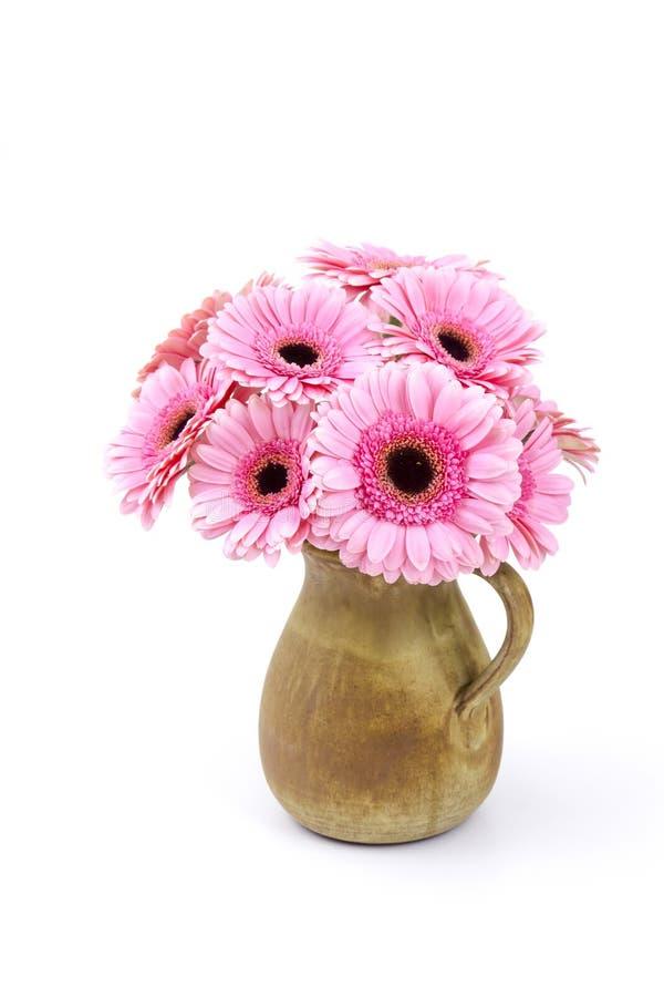 Różowy gerbera kwitnie w wazie obrazy stock