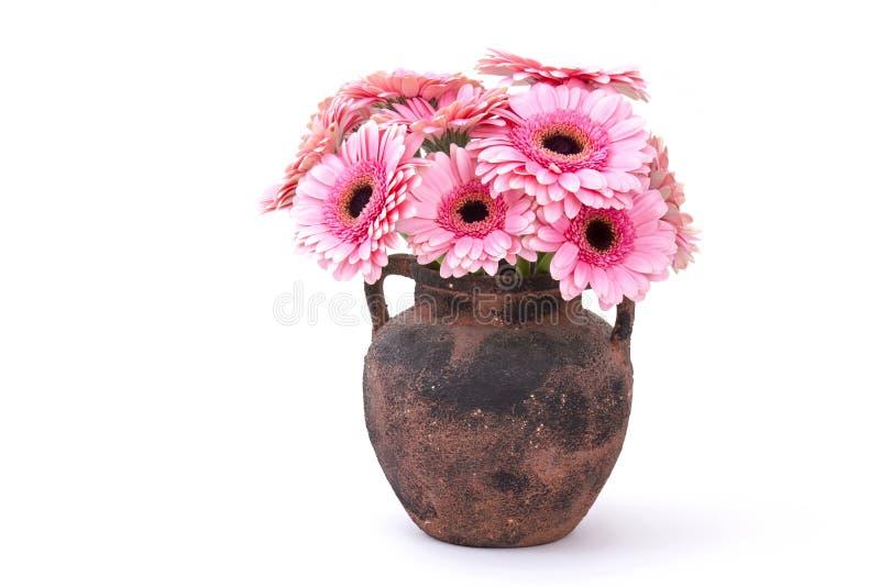 Różowy gerbera kwitnie w wazie zdjęcie stock