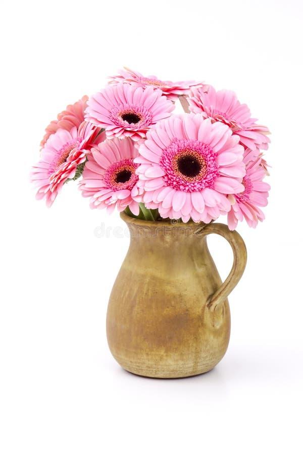 Różowy gerbera kwitnie w wazie zdjęcie royalty free