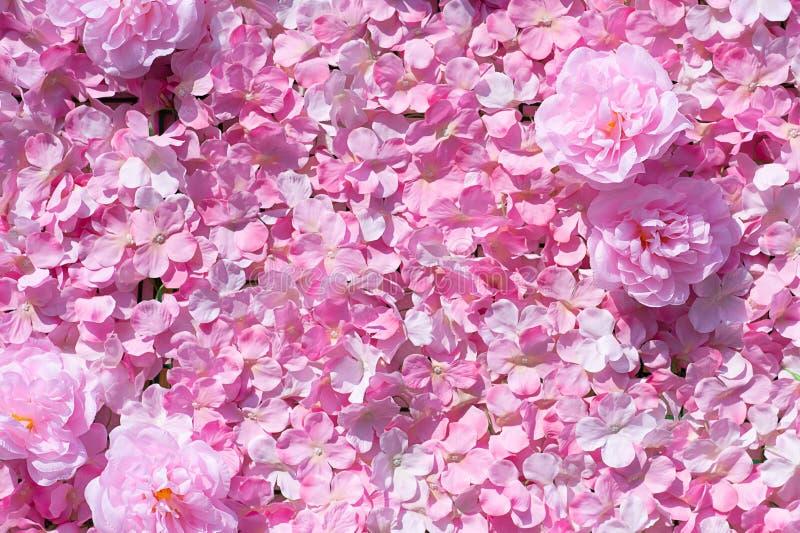 Różowy goździk Kwitnie Pięknego obrazy royalty free