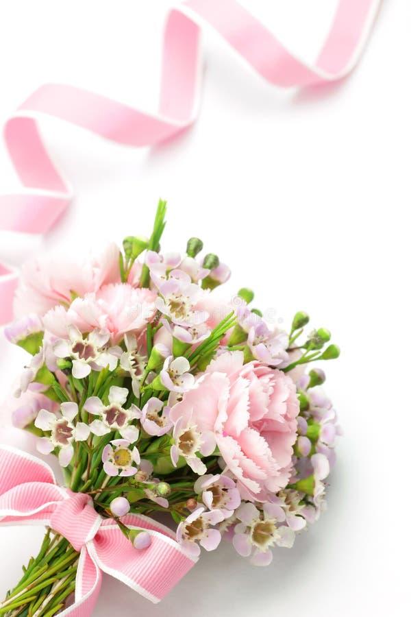 różowy goździka faborek zdjęcia stock