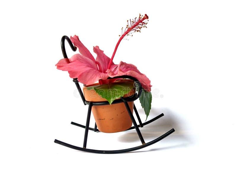 Różowy goździka kwiat z zielenią opuszcza w mini garnku z białym tłem artyku??w t?a dekoraci wewn?trzny ma?y rozmaito?ci biel obrazy stock
