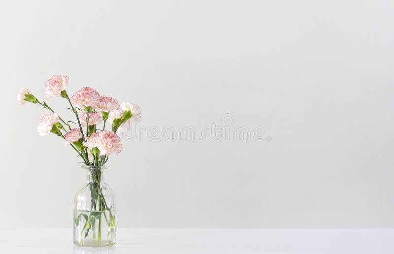 Różowy i biały goździk kwitnie w szklanej wazie obrazy royalty free