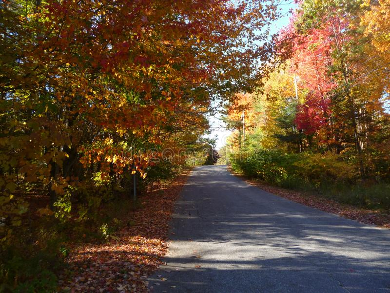 Różowy kolor żółty & zieleni drzewa na długiej drodze, obraz stock