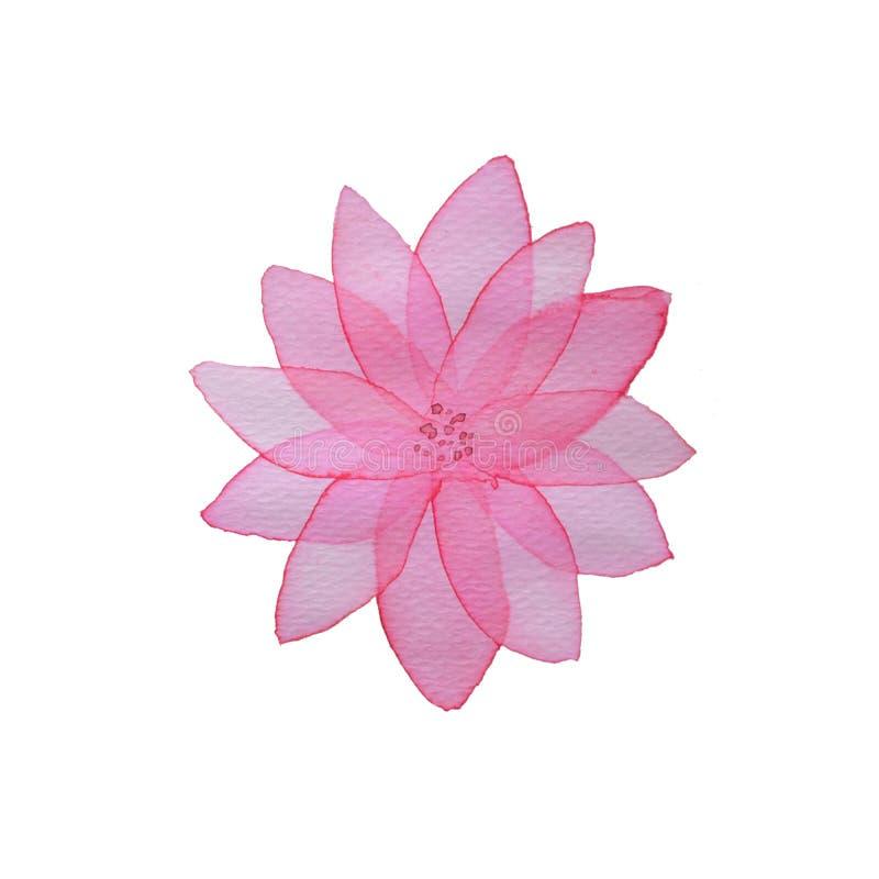 Różowy kolor wodny, przezroczysty różowy różowy kwiat na białym tle ilustracji