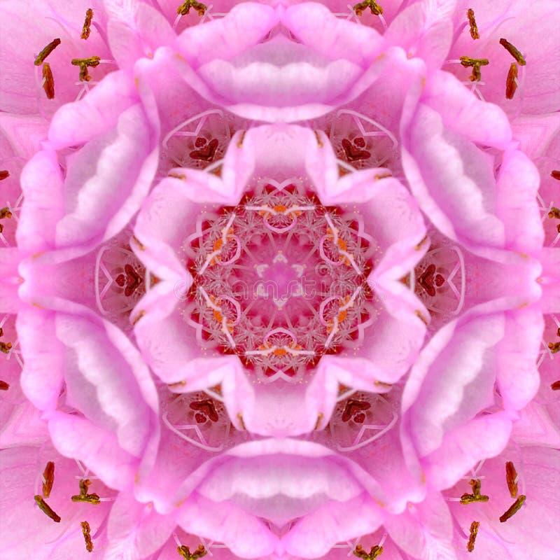 Różowy Koncentryczny kwiatu centrum mandala kalejdoskop royalty ilustracja
