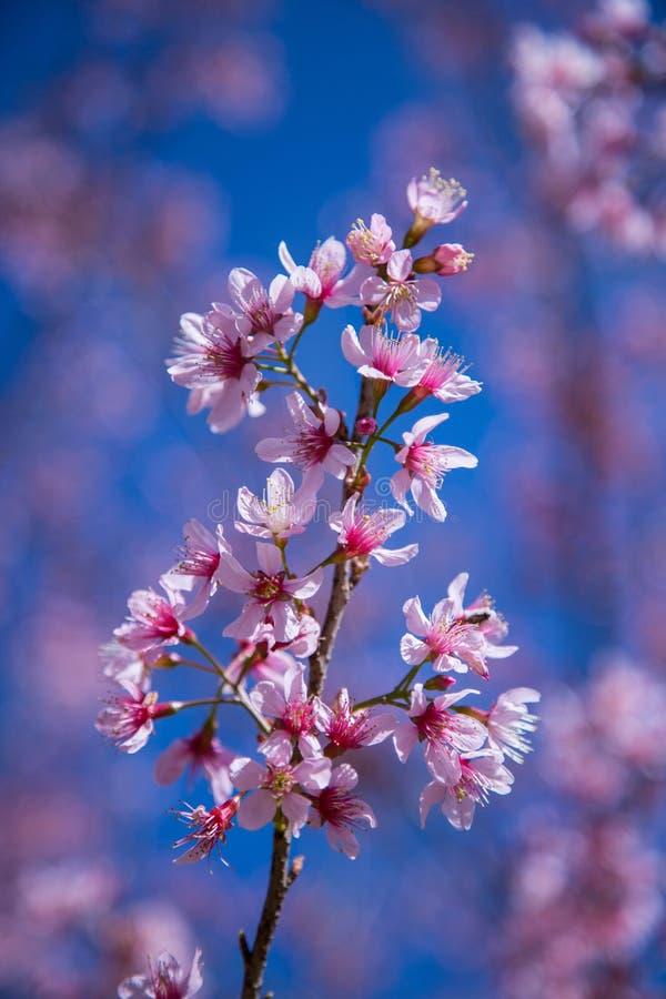 Różowy kwiat i niebieskie niebo fotografia stock