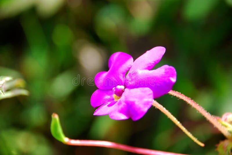 Różowy kwiat kolorowy obrazy royalty free